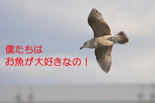 100_20120108212410.jpg