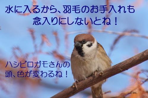 100_20120125231838.jpg