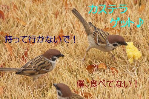 100_20120130221609.jpg