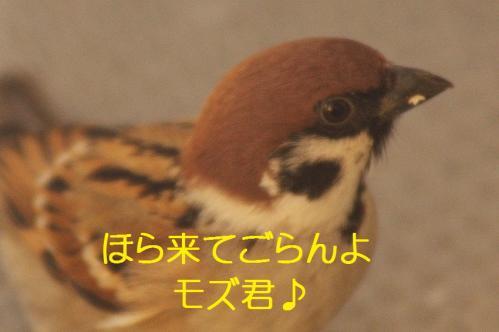 100_20120202223052.jpg
