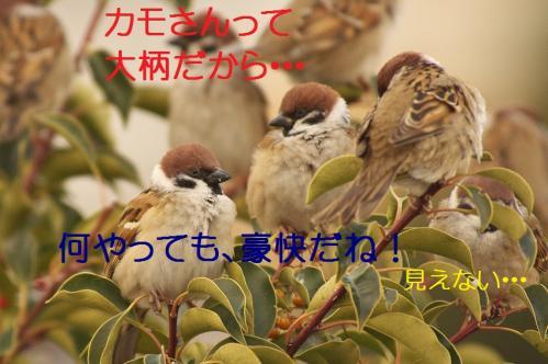 100_20120205210154.jpg