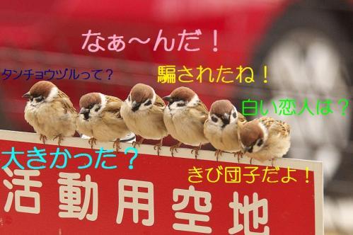 100_20120212185604.jpg