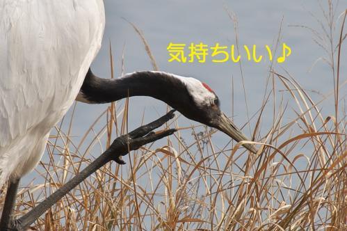 100_20120215214704.jpg