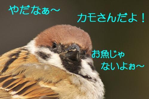 100_20120228213652.jpg