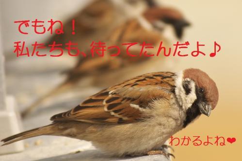 100_20120314230801.jpg