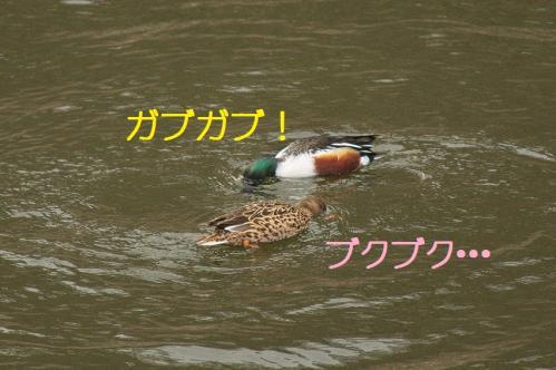100_20120319224836.jpg