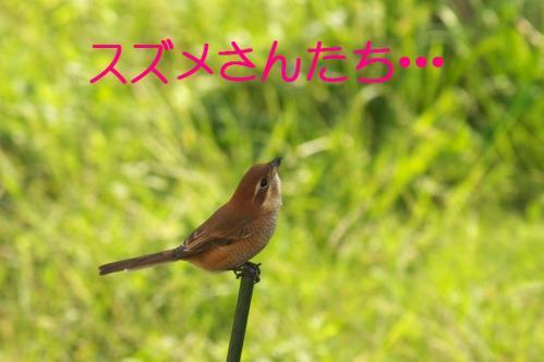 10_20101103223535.jpg