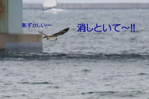 110_20101202194442.jpg