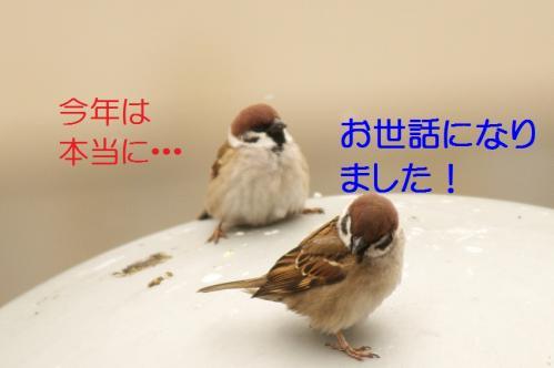110_20101231154007.jpg