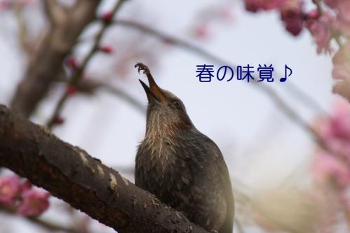 110_20110311011024.jpg