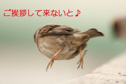 110_20110329232018.jpg
