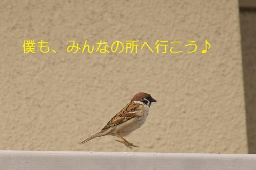 110_20110415020100.jpg