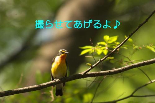 110_20110504210036.jpg