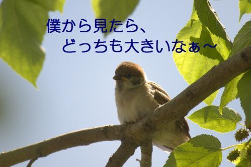 110_20110531203806.jpg