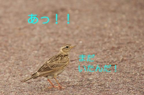 110_20110608221358.jpg