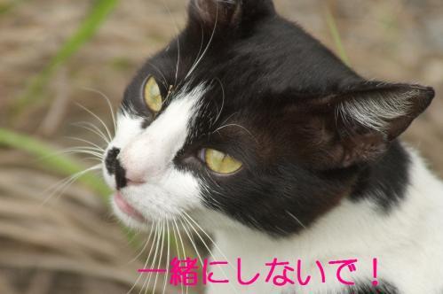 110_20110621205306.jpg