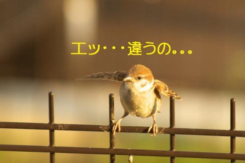 110_20110801222504.jpg