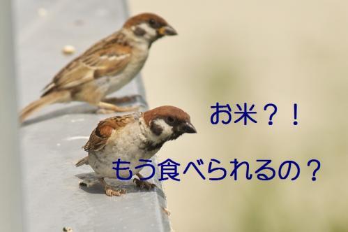 110_20110806212206.jpg