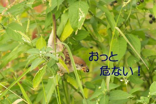 110_20110808211745.jpg