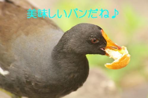 110_20110829224907.jpg