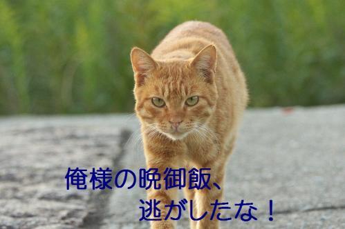 110_20111004221557.jpg