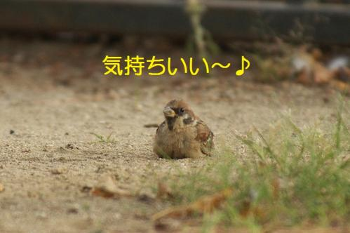 110_20111007221232.jpg