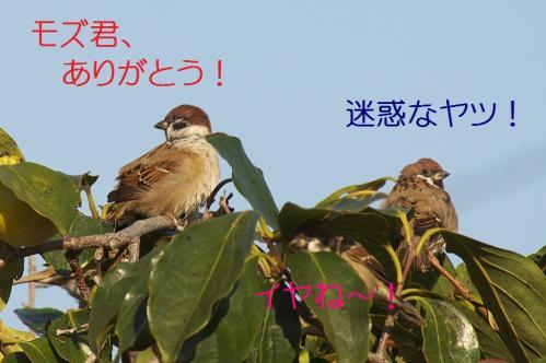 110_20111017220537.jpg