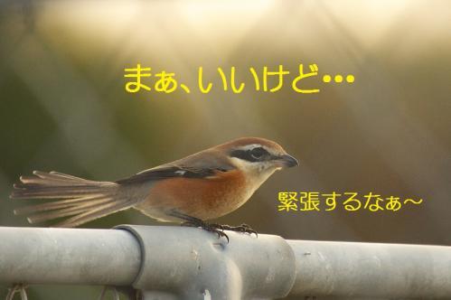 110_20111128225109.jpg