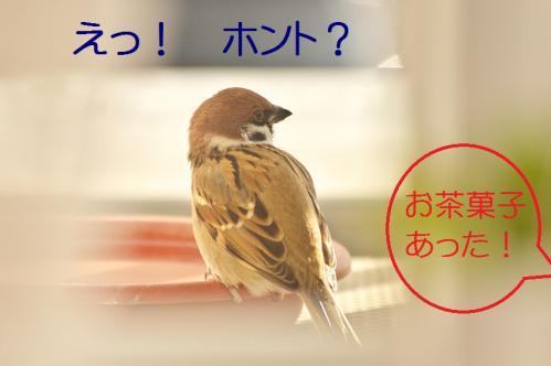 110_20111228225545.jpg