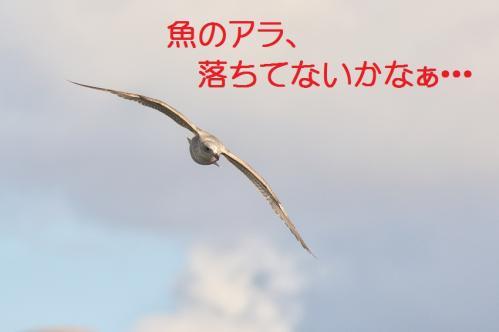110_20120108212411.jpg