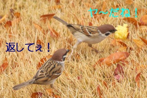 110_20120130221609.jpg