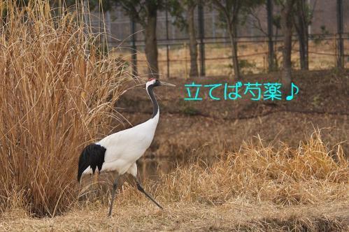 110_20120212185604.jpg