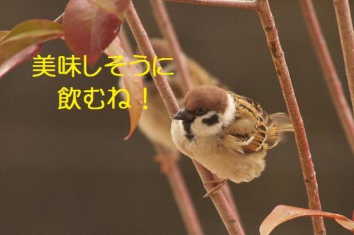 110_20120213220147.jpg