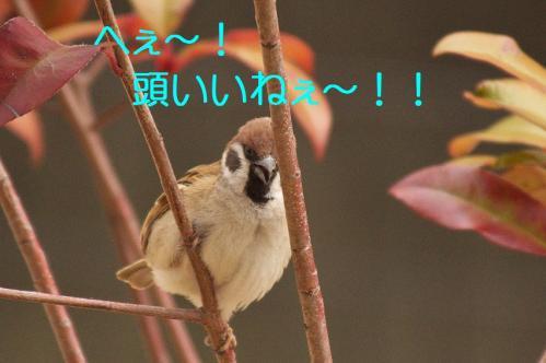 110_20120319224835.jpg