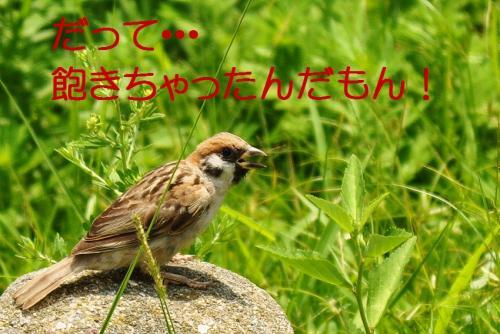 11_20100831203120.jpg