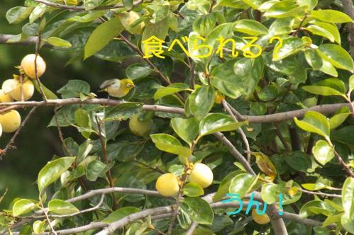 11_20101010201653.jpg