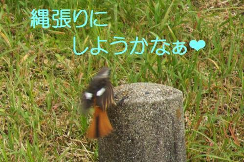 11_20101101224557.jpg