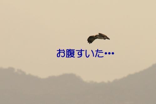 120_20101202194441.jpg