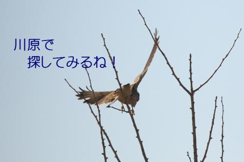 120_20101204222522.jpg