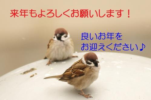 120_20101231154007.jpg