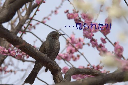 120_20110311011023.jpg