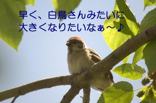 120_20110531203806.jpg