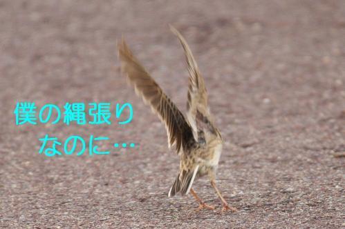 120_20110608221357.jpg
