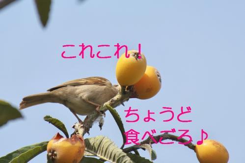 120_20110705202827.jpg