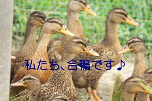 120_20110801222503.jpg
