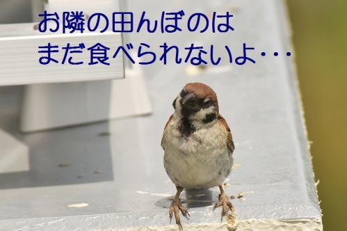 120_20110806212206.jpg