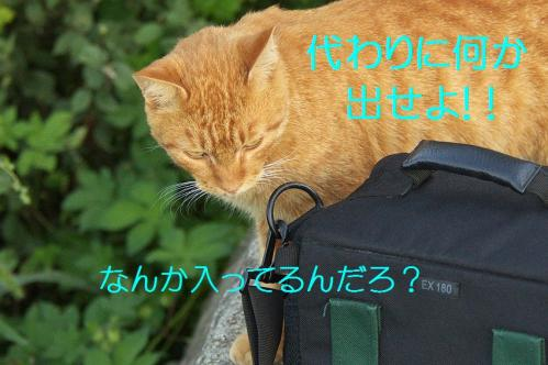 120_20111004221556.jpg