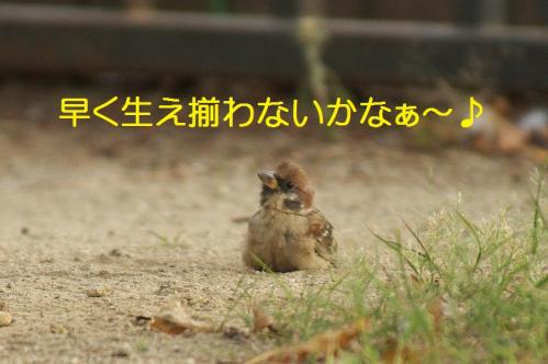 120_20111007221231.jpg