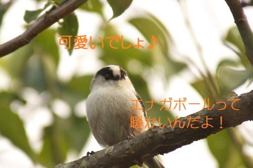 120_20111016185326.jpg