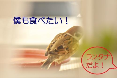 120_20111228225544.jpg